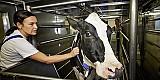 Der Methanausstoß von Milchkühen kann jetzt ganz einfach ermittelt werden